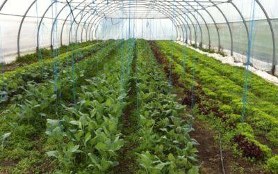 Produits fermiers près de Sarrebourg