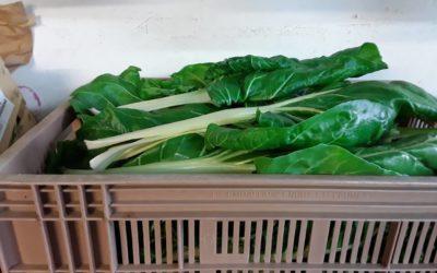 Vente de légumes bio à Sarrebourg